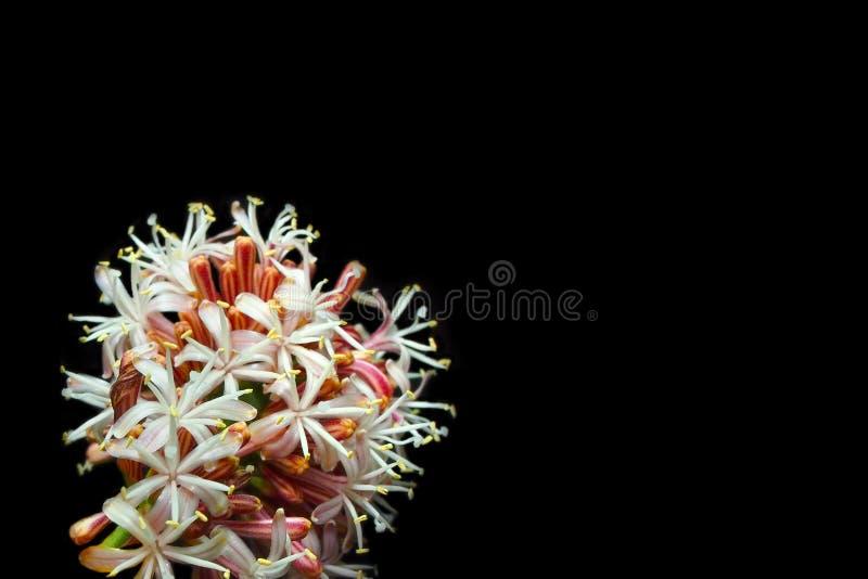 Flores hermosas en fondo negro fotos de archivo