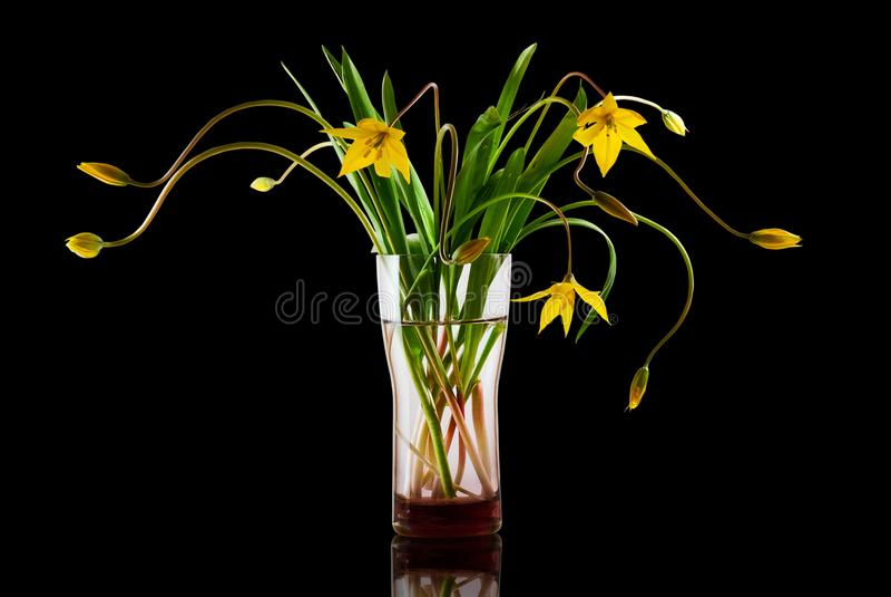 Flores hermosas en un florero fotos de archivo