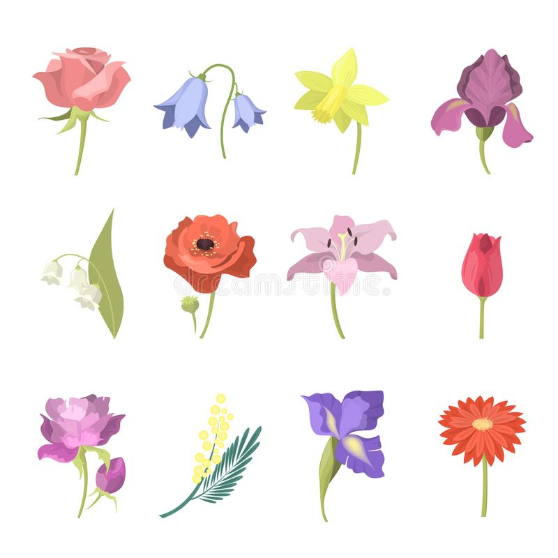 Flores hermosas fijadas libre illustration