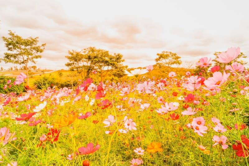 Flores hermosas que florecen en el verano o el día de primavera en suavidad fotos de archivo libres de regalías
