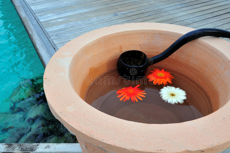 Flores hermosas que flotan en el agua fotografía de archivo libre de regalías