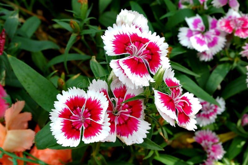 Flores hermosas que la naturaleza crea foto de archivo