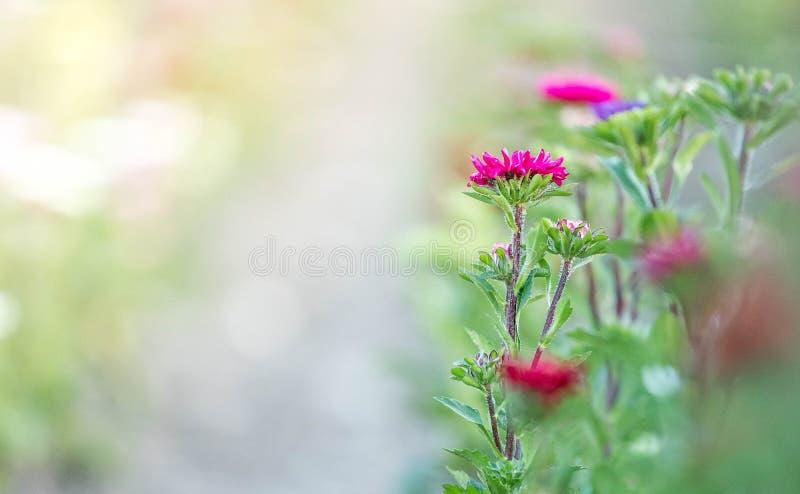 Flores hermosas, recolectadas en un campo imagenes de archivo