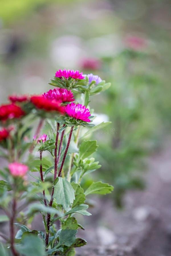 Flores hermosas, recolectadas en un campo fotografía de archivo