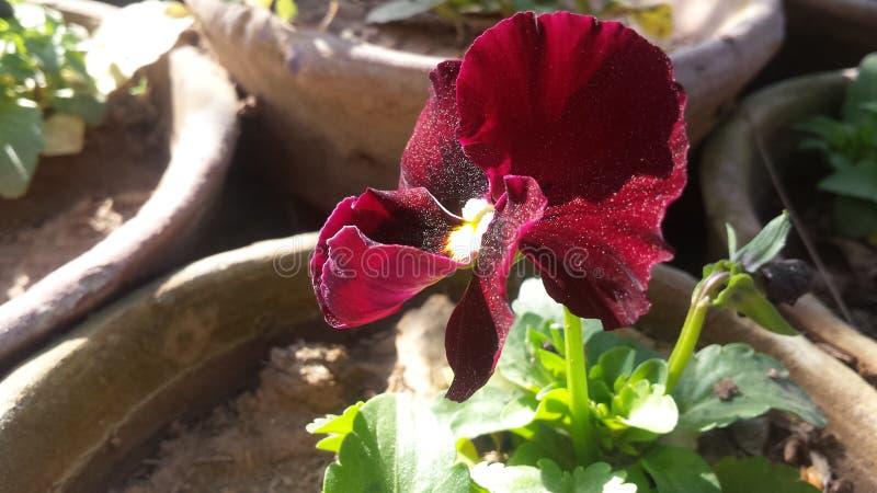 Flores hermosas rojas imagenes de archivo