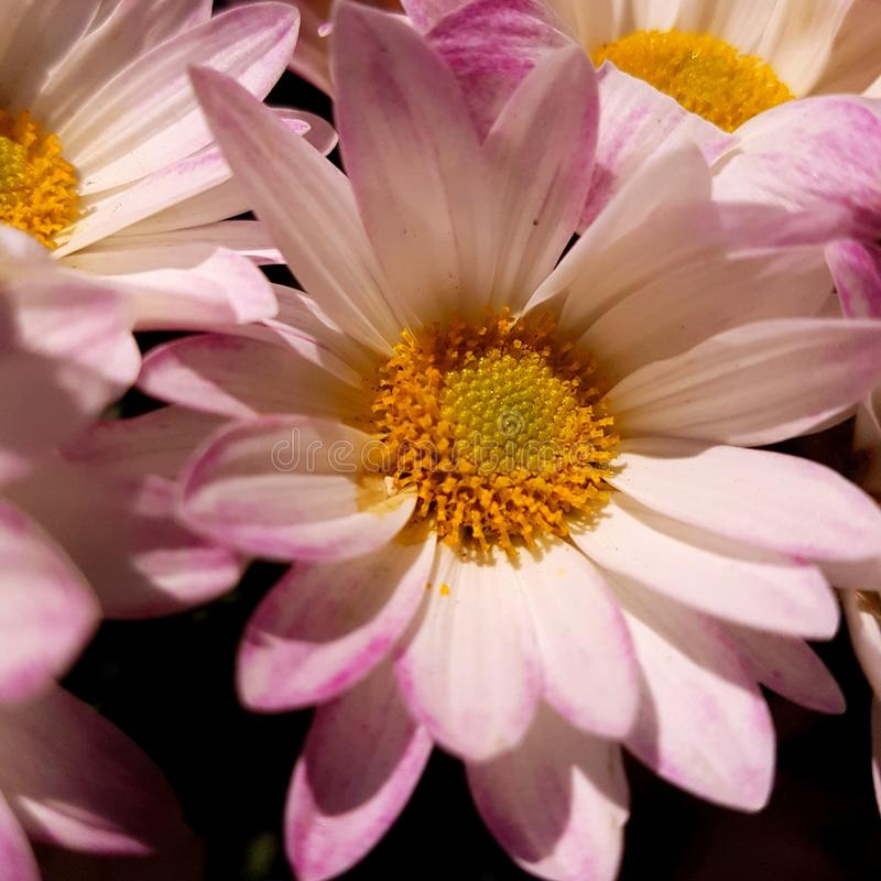 Flores royalty free stock photos