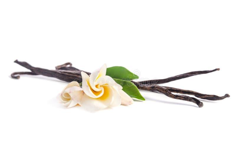 Flores hermosas y vainilla natural foto de archivo