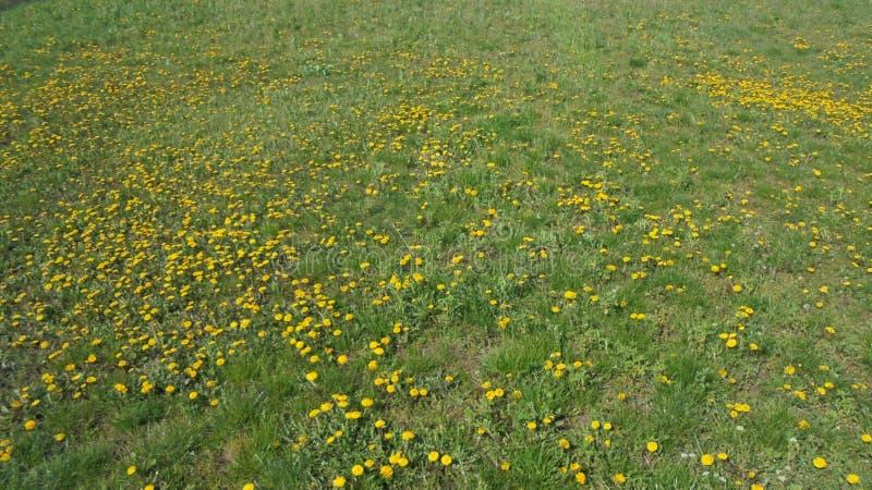 Flores, hierba, vida, momento tranquilo a tiempo imagen de archivo