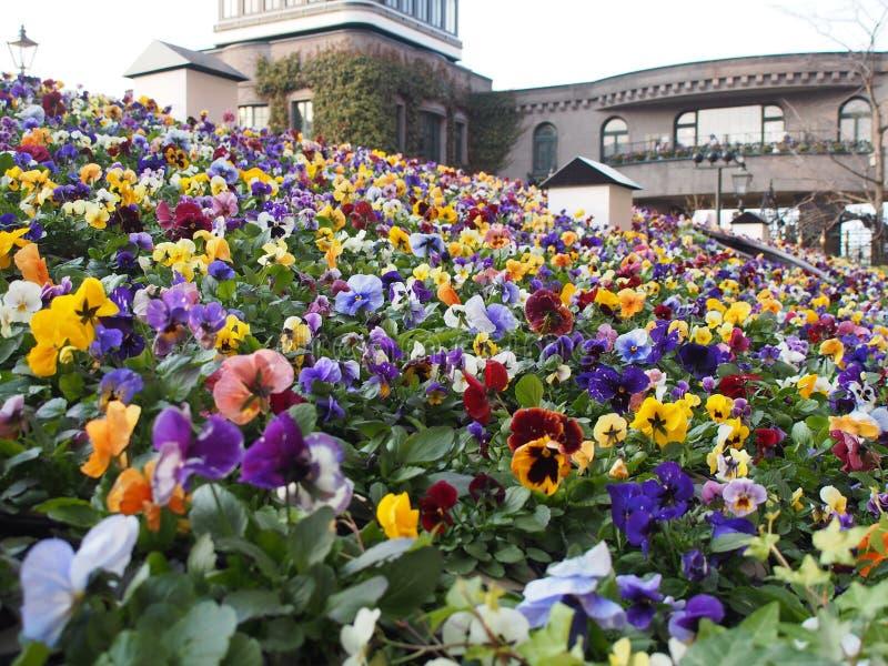 Flores Hokkaido foto de archivo