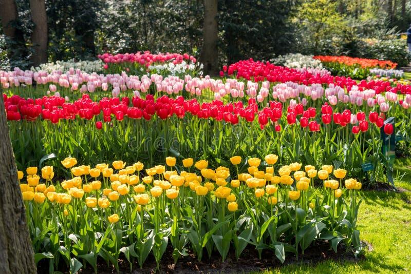 Flores holandesas bonitas foto de stock