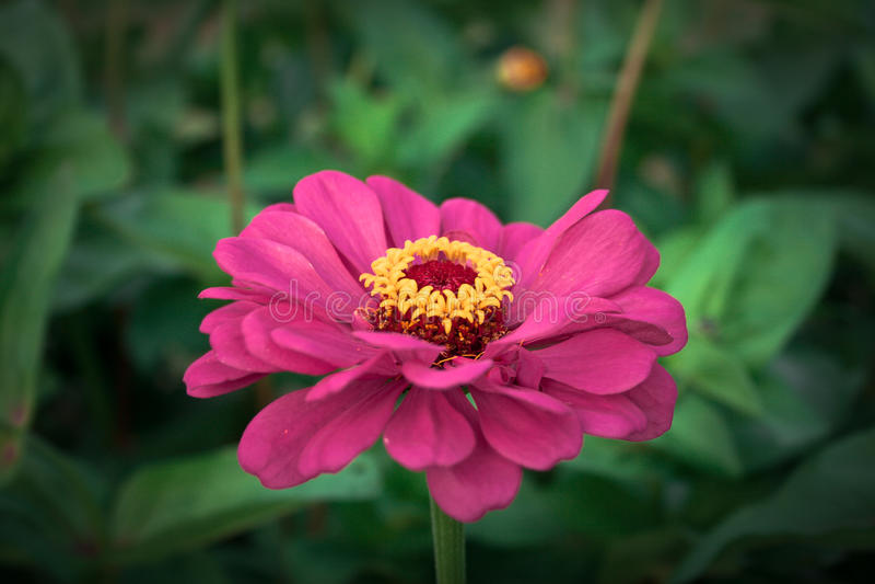 Flores impressionantes fotografia de stock