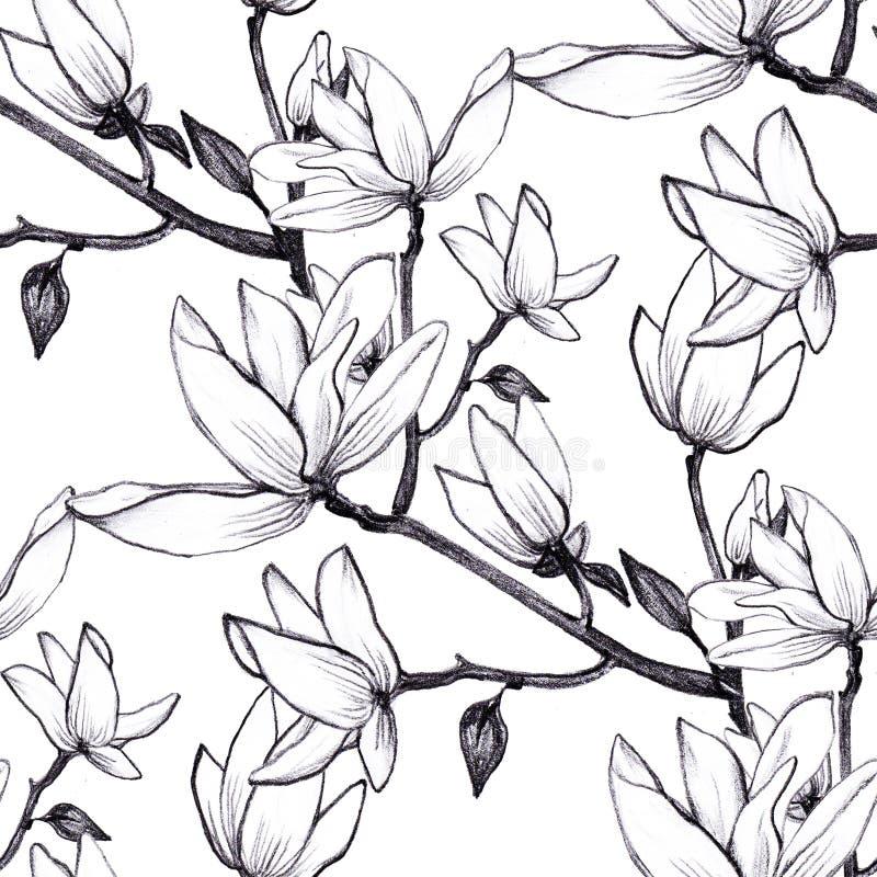 Flores inconsútiles de la magnolia del modelo exhausto de la mano en el fondo blanco libre illustration