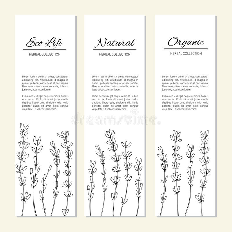 Flores isoladas em um branco, bandeiras verticais da alfazema, etiquetas, gráfico erval tirado mão do vintage do esboço do vetor  ilustração royalty free