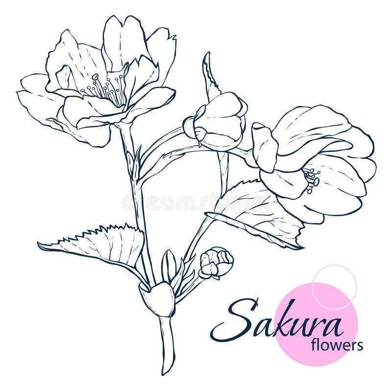 Flores japonesas tiradas mão de sakura da flor ilustração do estilo da Linha-arte Livro para colorir para o adulto e as crianças fotos de stock royalty free