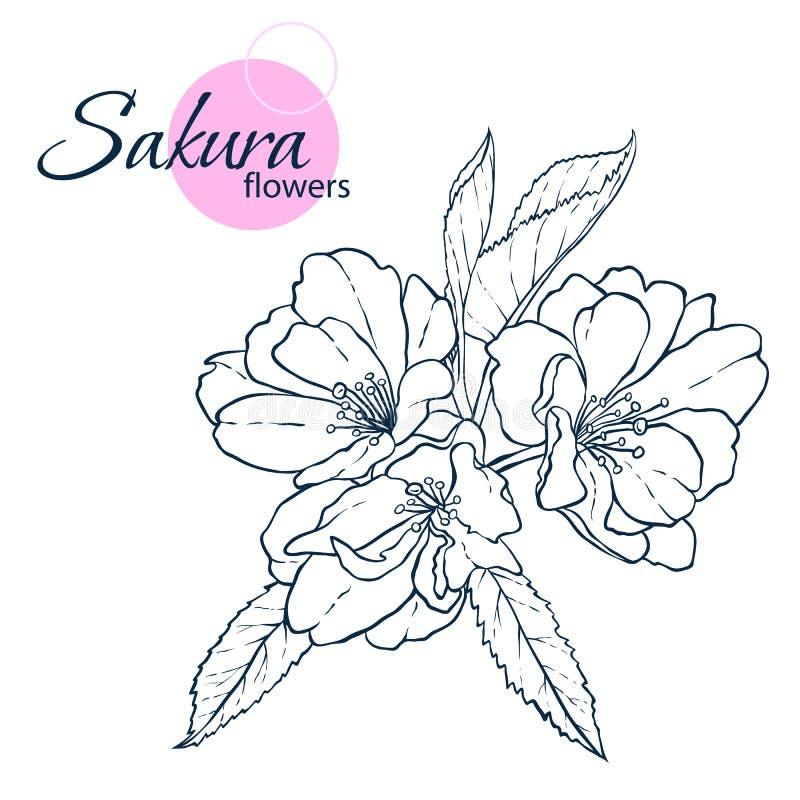 Flores japonesas tiradas mão de sakura da flor ilustração do estilo da Linha-arte Livro para colorir para o adulto e as crianças foto de stock royalty free