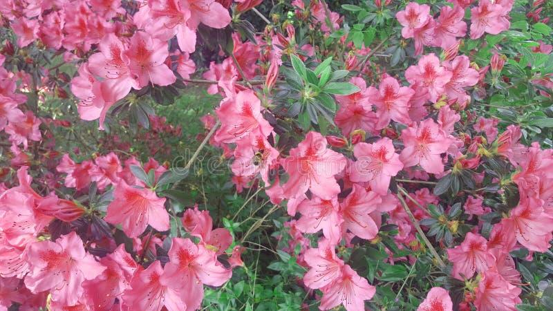Flores ligeras La belleza en naturaleza fotografía de archivo libre de regalías
