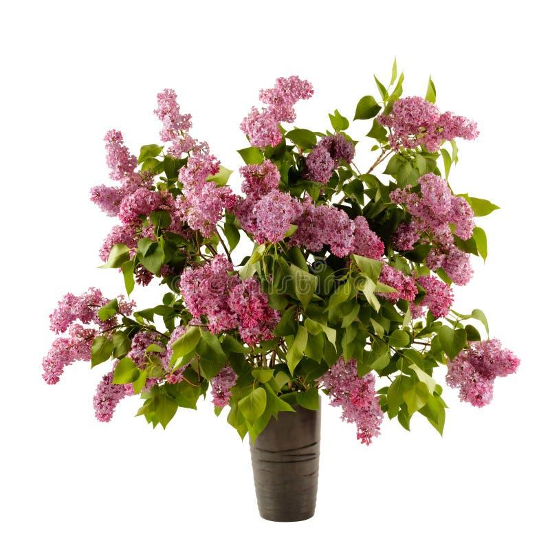 Flores lil?s bonitas no vaso isolado no fundo branco imagens de stock
