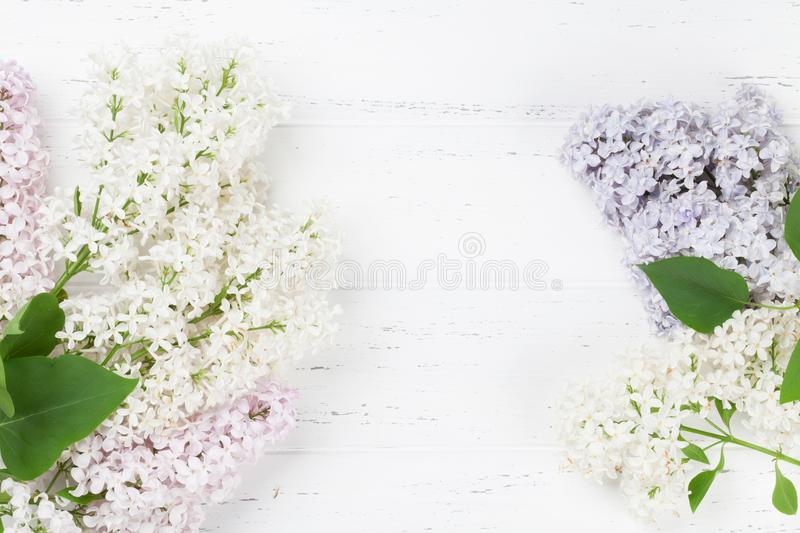 Flores lilás coloridas foto de stock royalty free