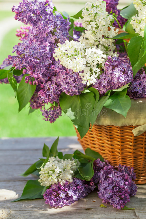 Flores lilás coloridas na cesta imagem de stock royalty free