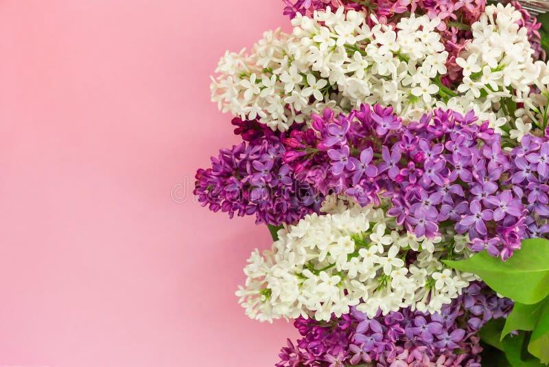 Flores lilás frescas no fundo cor-de-rosa delicado Lugar para o texto foto de stock royalty free