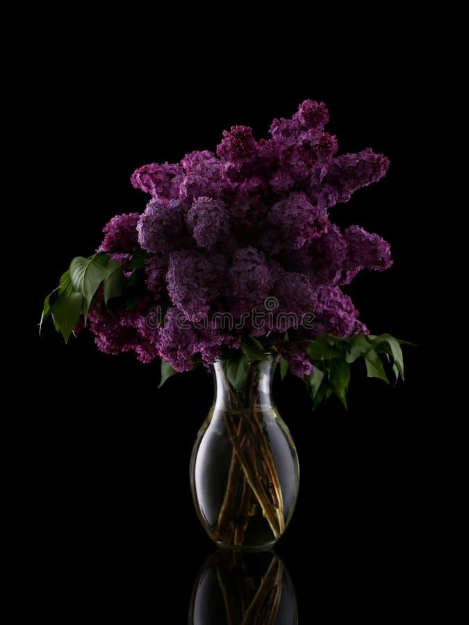 Flores lilás no vaso isolado no preto imagens de stock