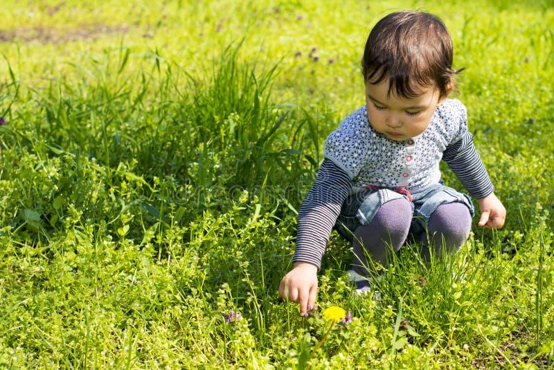 Flores lindas de la cosecha de la niña en el prado fotografía de archivo libre de regalías