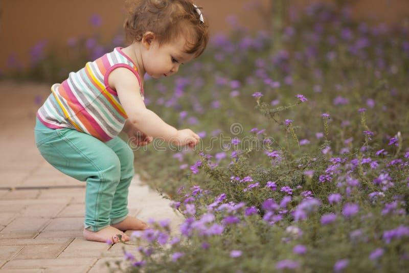 Flores lindas de la cosecha del bebé imagenes de archivo