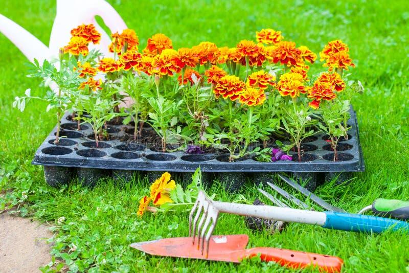 Flores listas para plantar en una cama de flor imágenes de archivo libres de regalías