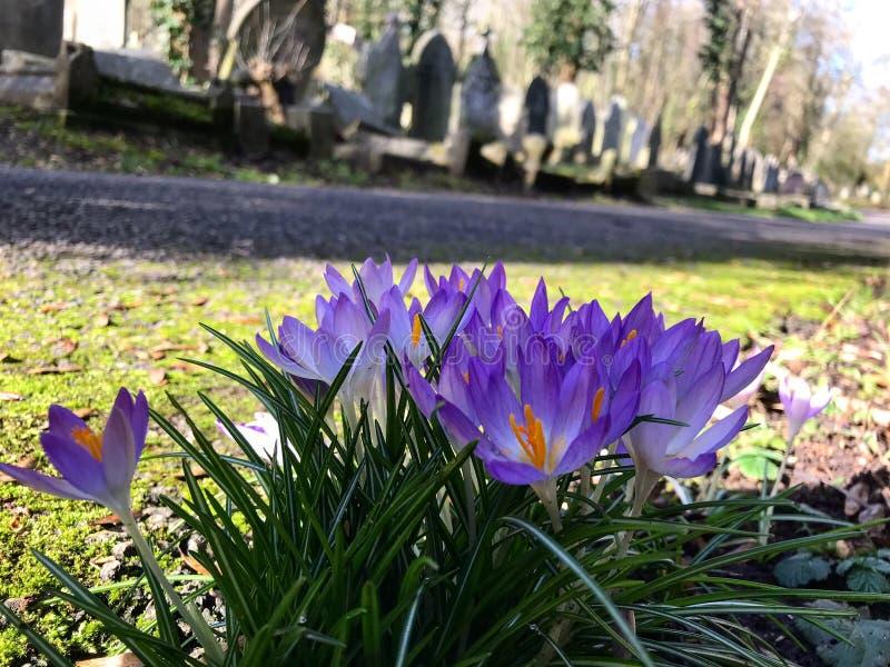 Flores Londres del cementerio fotografía de archivo libre de regalías