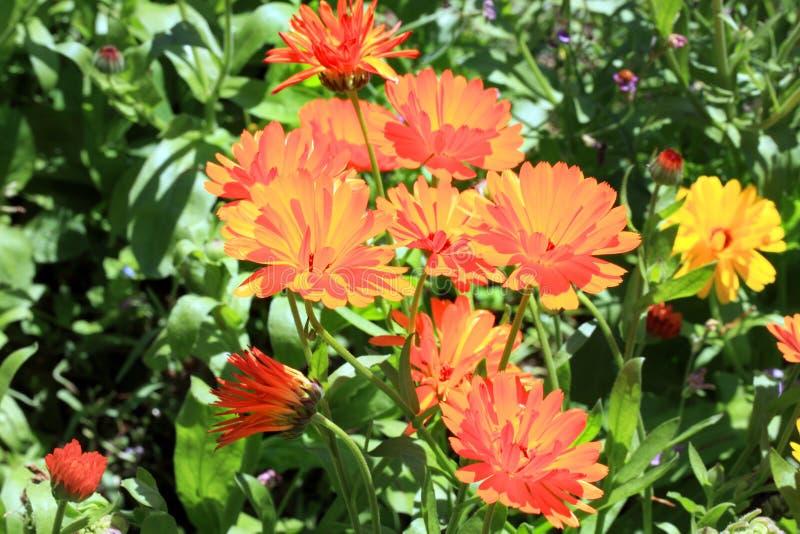 Flores mágicas de la maravilla imágenes de archivo libres de regalías