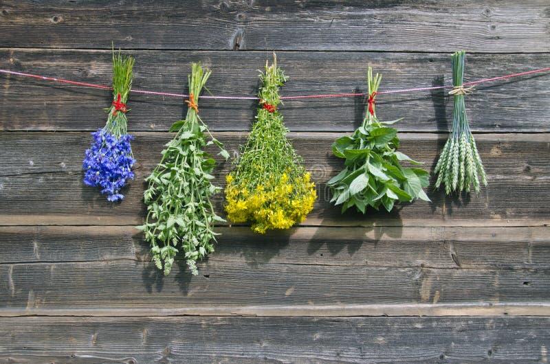 Flores médicas e plantas do vário verão na parede fotografia de stock
