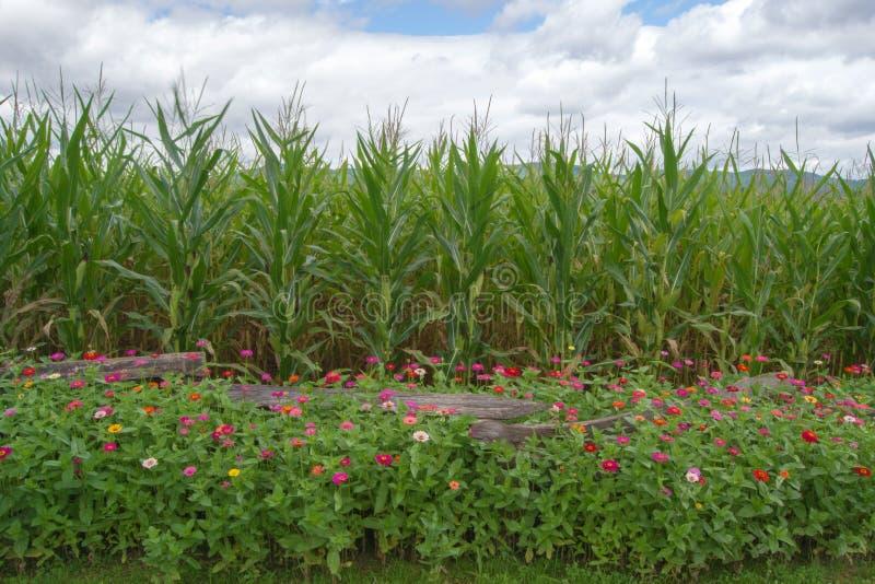 Download Flores, Maíz, Montañas Y Cielo Foto de archivo - Imagen de hermoso, flor: 44857968