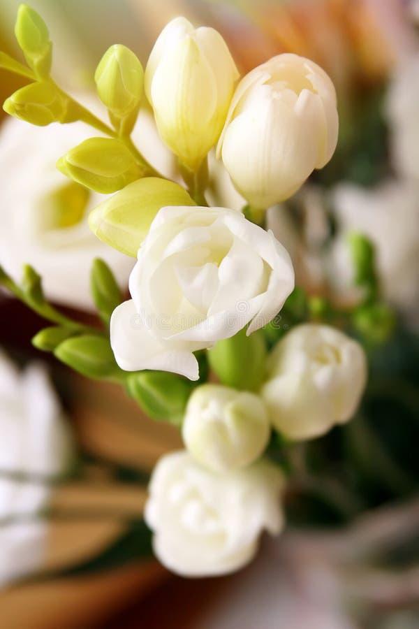 Flores macias imagem de stock