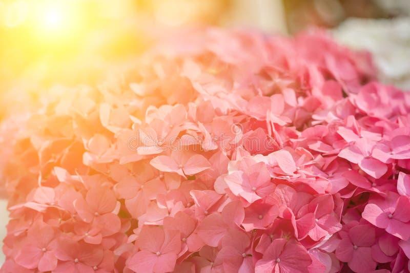 Flores macias da mola imagens de stock royalty free