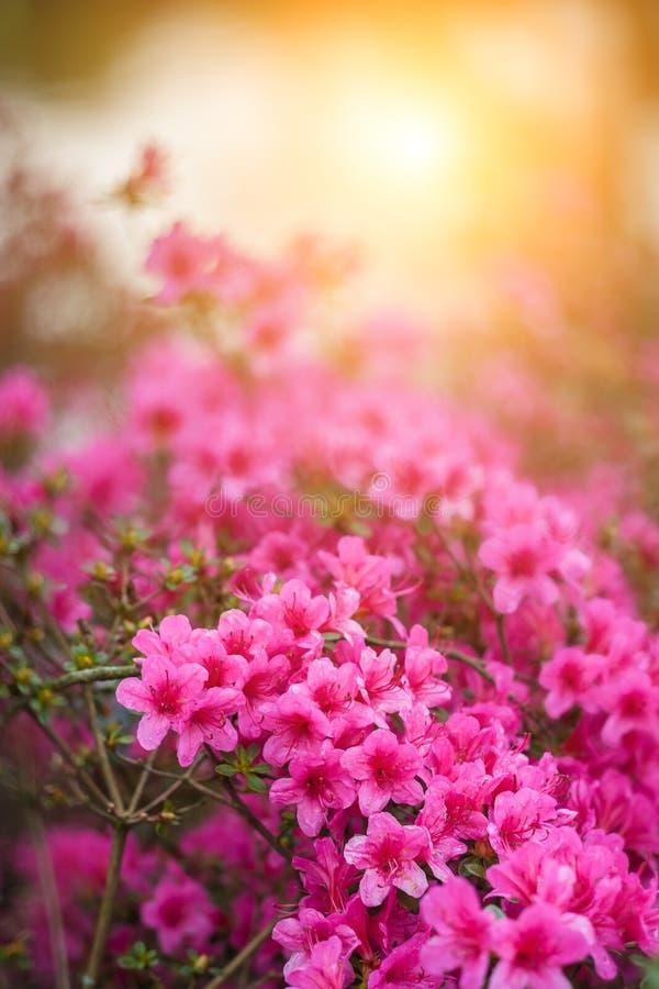 Flores macias da mola imagem de stock
