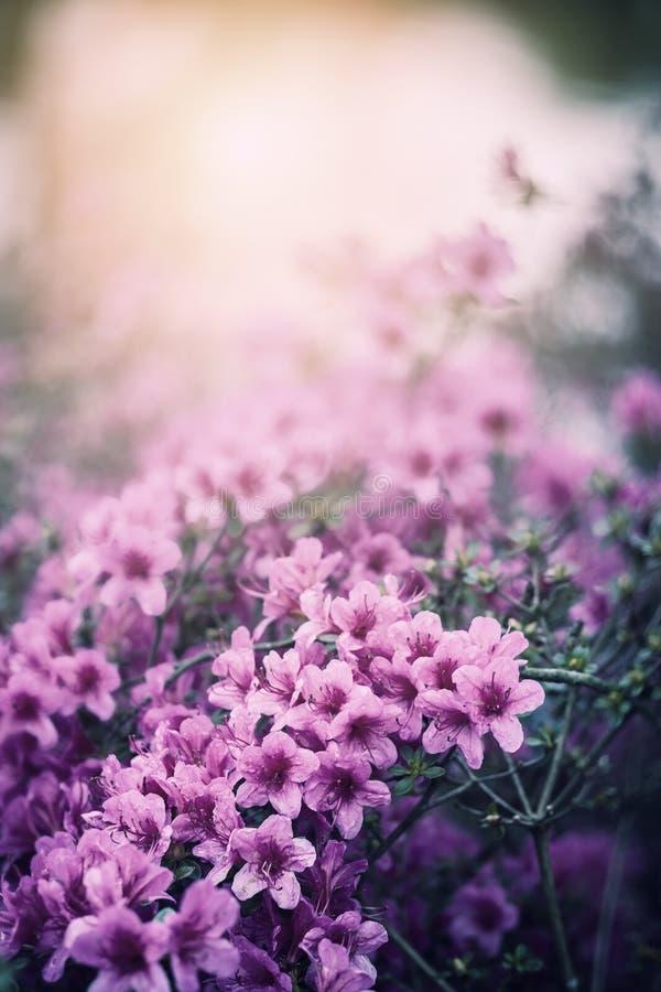 Flores macias da mola fotografia de stock