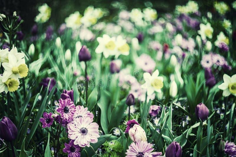 Flores macias da mola imagem de stock royalty free