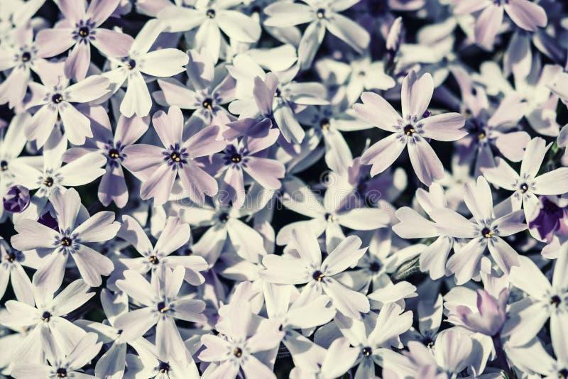 Flores macias da mola fotos de stock