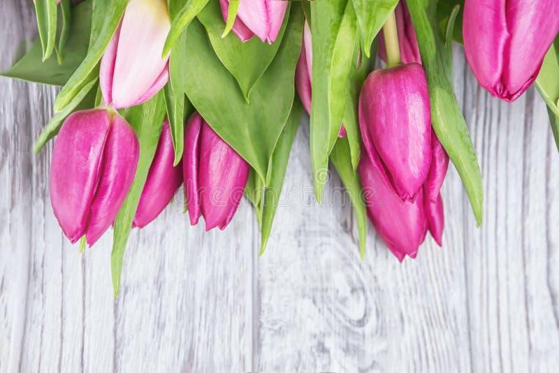 Flores magentas rosadas frescas de los tulipanes en un fondo gris Visión superior imagenes de archivo