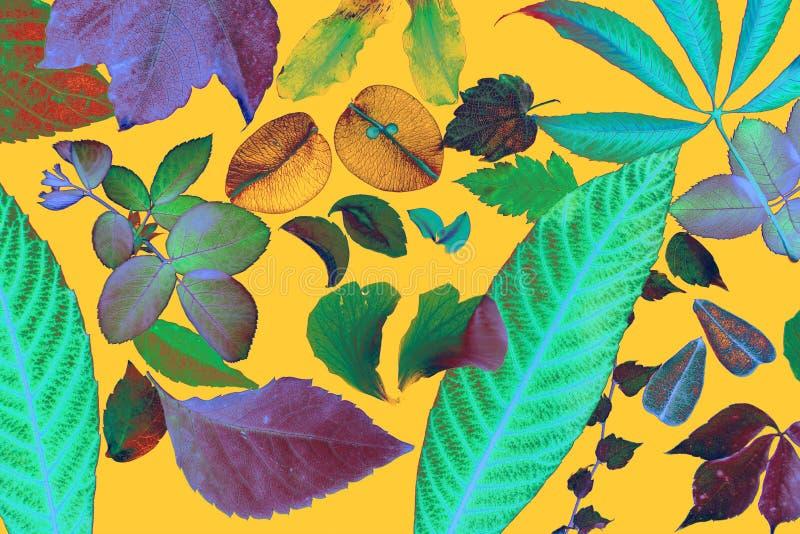Flores manipuladas color, hojas, pétalos fotos de archivo libres de regalías