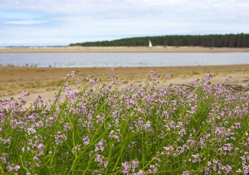 Flores, mar y laguna rosados hermosos imagen de archivo libre de regalías