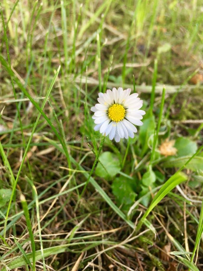 Flores, margaritas, fauna, belleza, fotografía de archivo