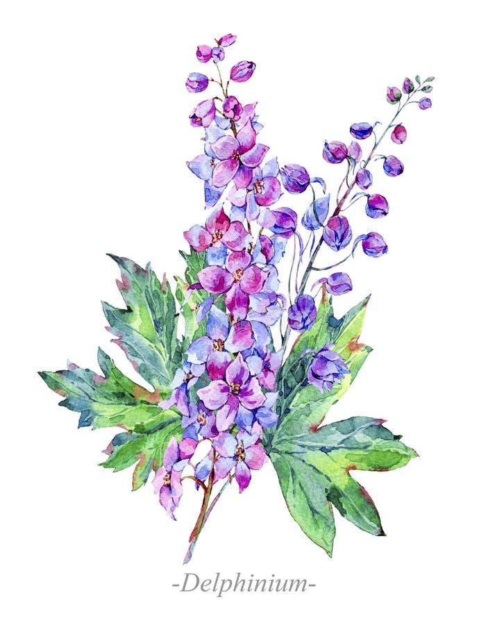 Flores medicinales del verano de la acuarela, planta del delfinio ilustración del vector