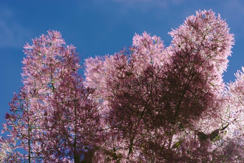 Flores melenudas de un árbol a una peluca fotos de archivo libres de regalías