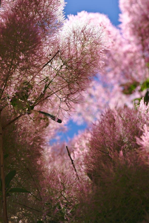 Flores melenudas de un árbol a una peluca imagen de archivo