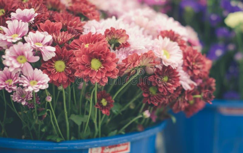 Flores mezcladas del crisantemo imágenes de archivo libres de regalías