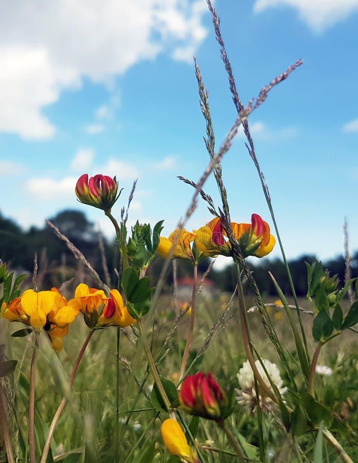 Flores micro imágenes de archivo libres de regalías