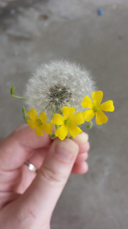 Flores minúsculas fotos de archivo