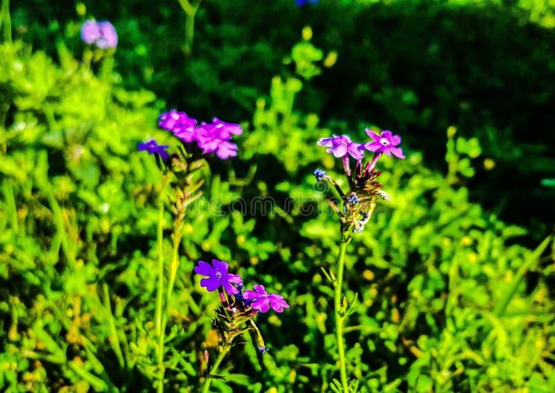 Flores minúsculas foto de archivo