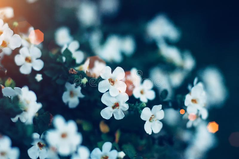 Flores minúsculas blancas en primer en fondo verde Ciérrese para arriba de floral minimalista para el arreglo floristry imagen de archivo libre de regalías